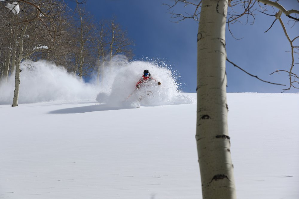 A person downhill skiing in the sun close to aspen trees - NTN Bindings
